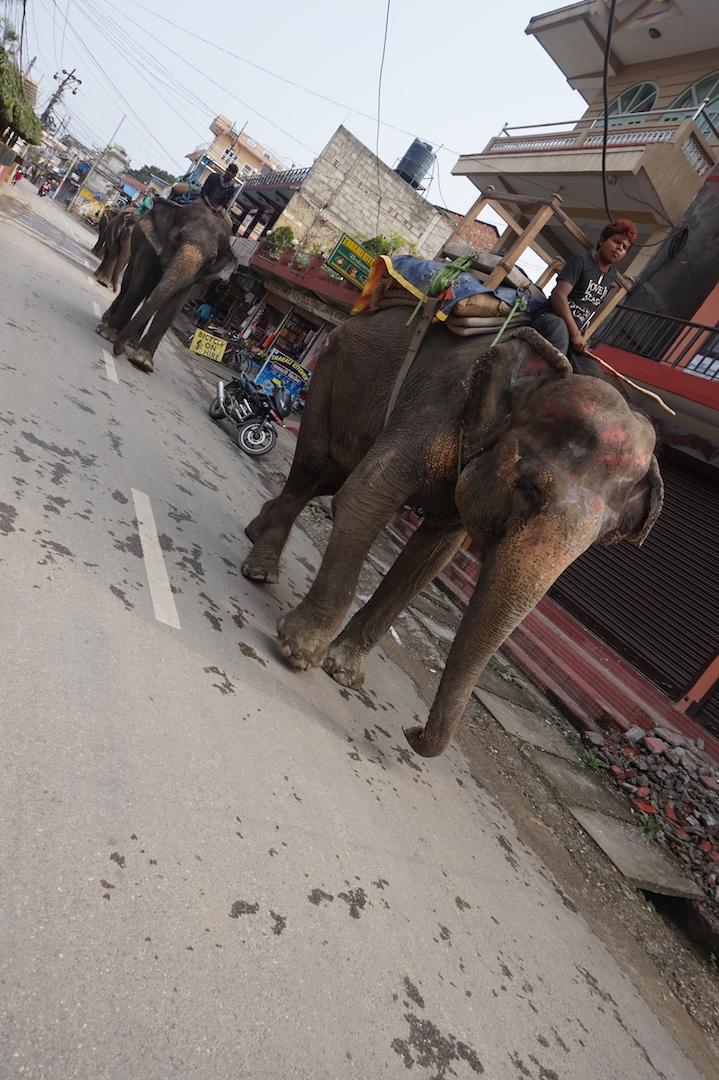 Chitwan11