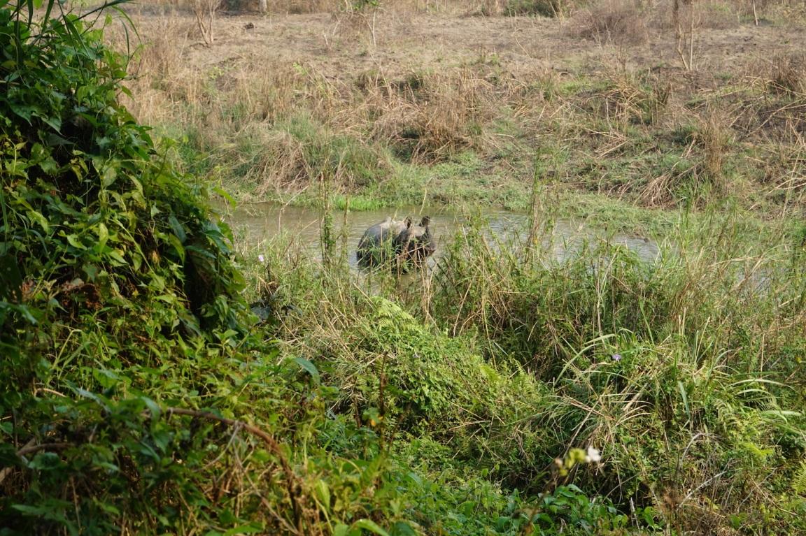 Chitwan2