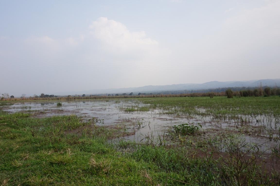 Chitwan33
