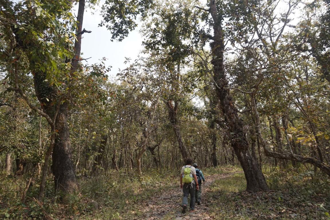 Chitwan37
