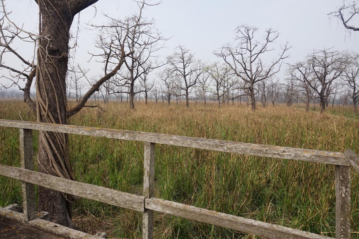 Chitwan39
