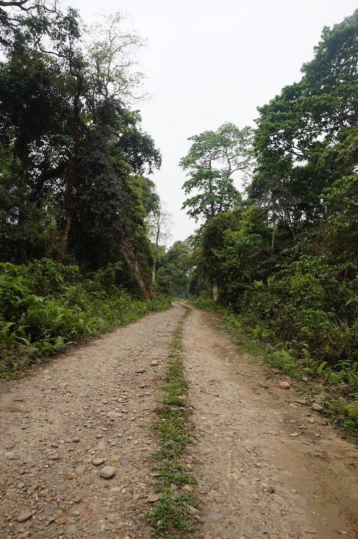 Chitwan42