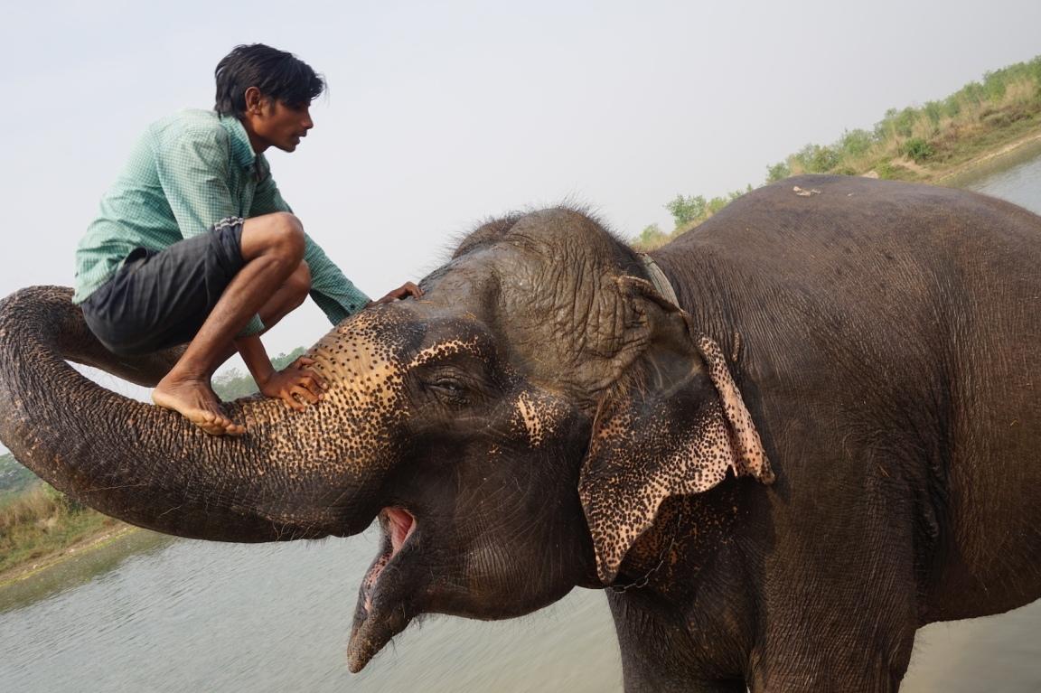Chitwan65