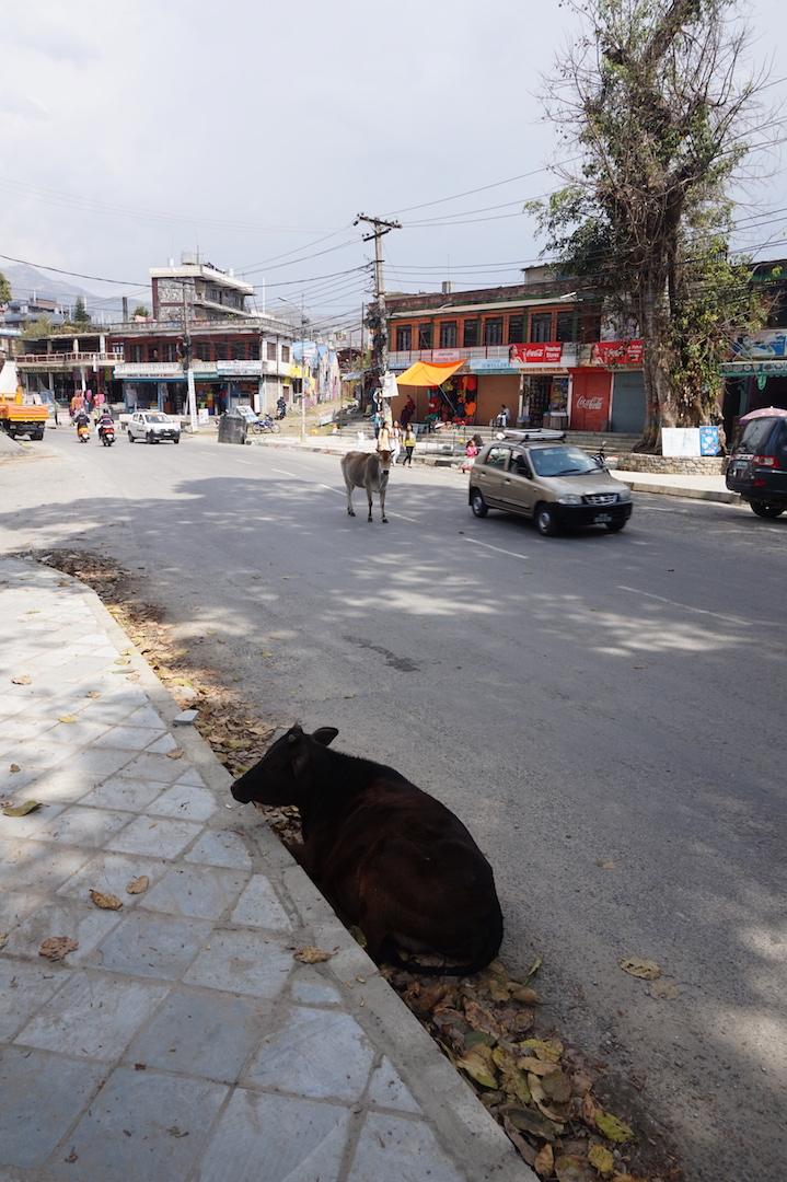Pokhara30