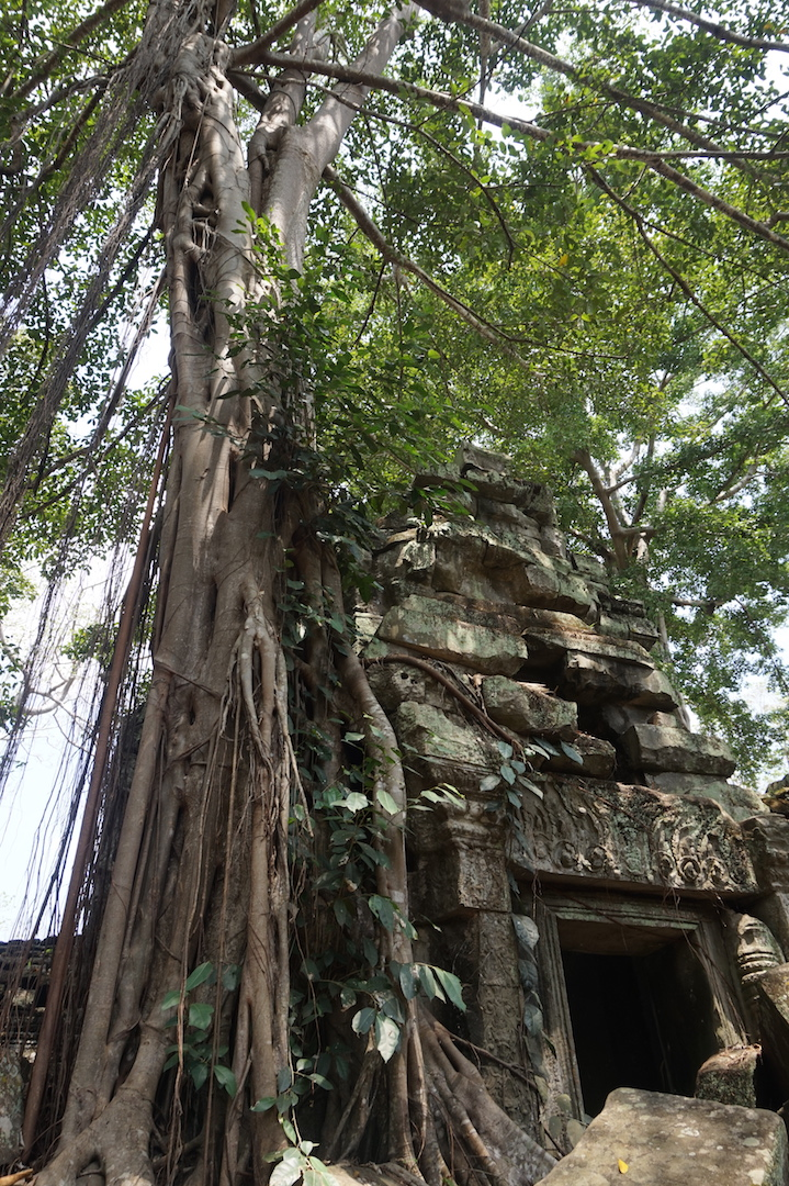 SiemReap-Angkor7