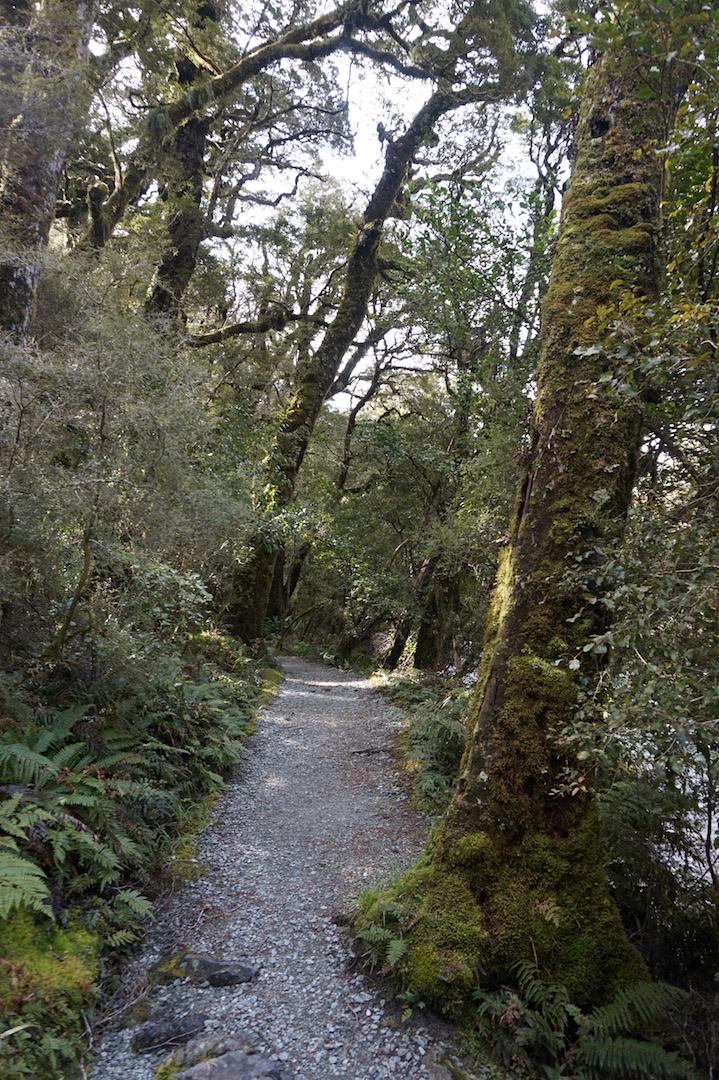 Milford Sound13