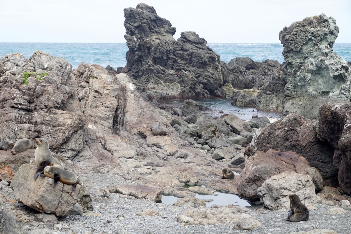 Sur la route de Cap Palliser16