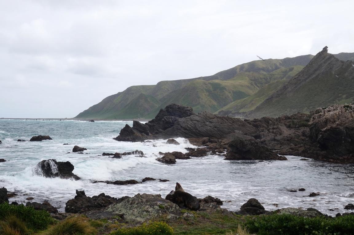 Sur la route de Cap Palliser28