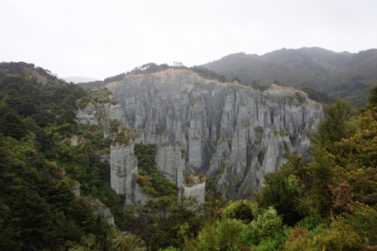 Sur la route de Cap Palliser41