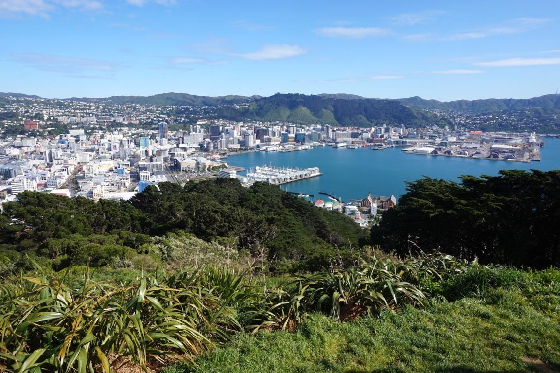 Wellington15