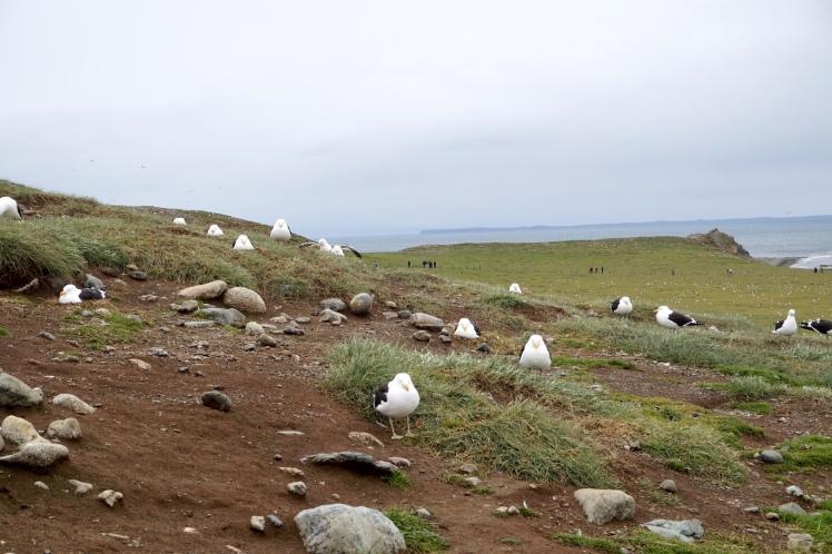 Punta Arenas12