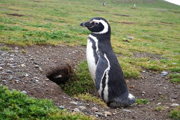 Punta Arenas28