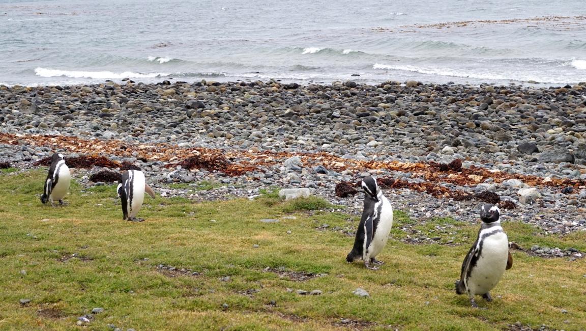 Punta Arenas34