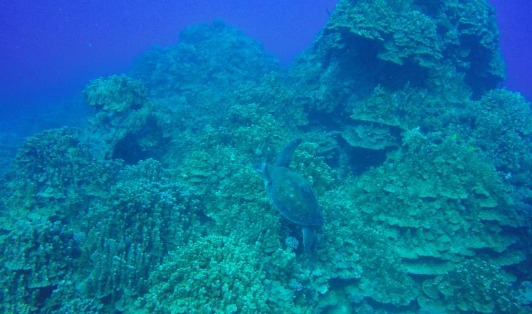 Plongée ile de Paques18