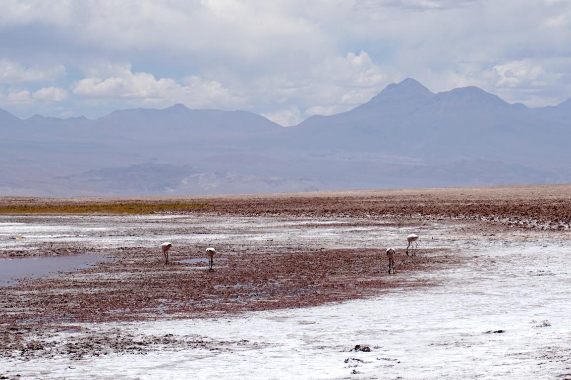 San Pedro de Atacama49