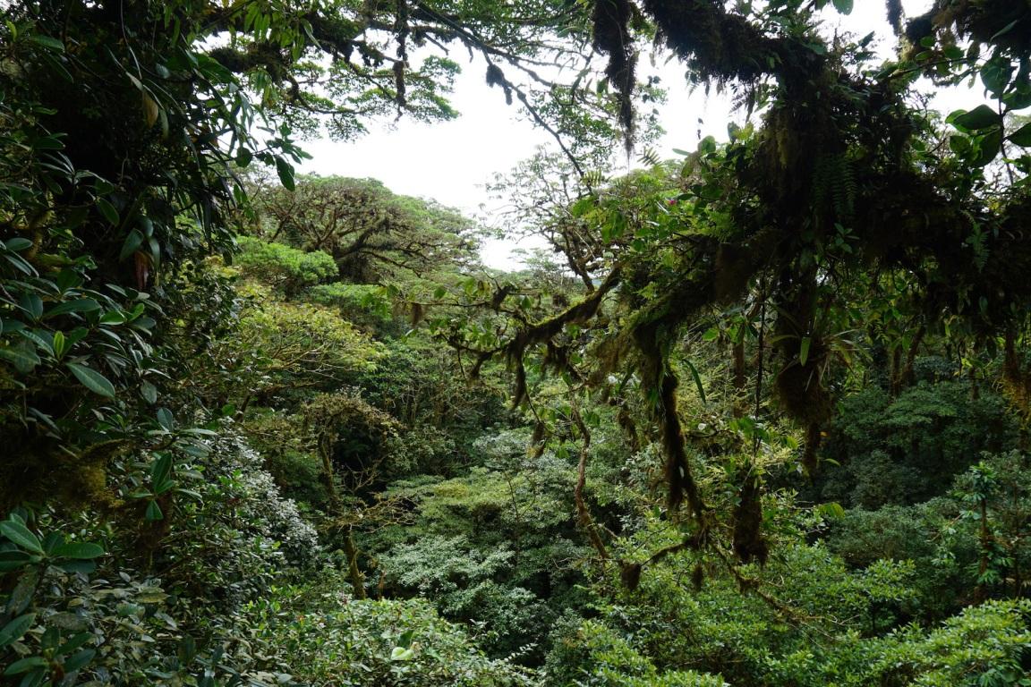 Monteverde10