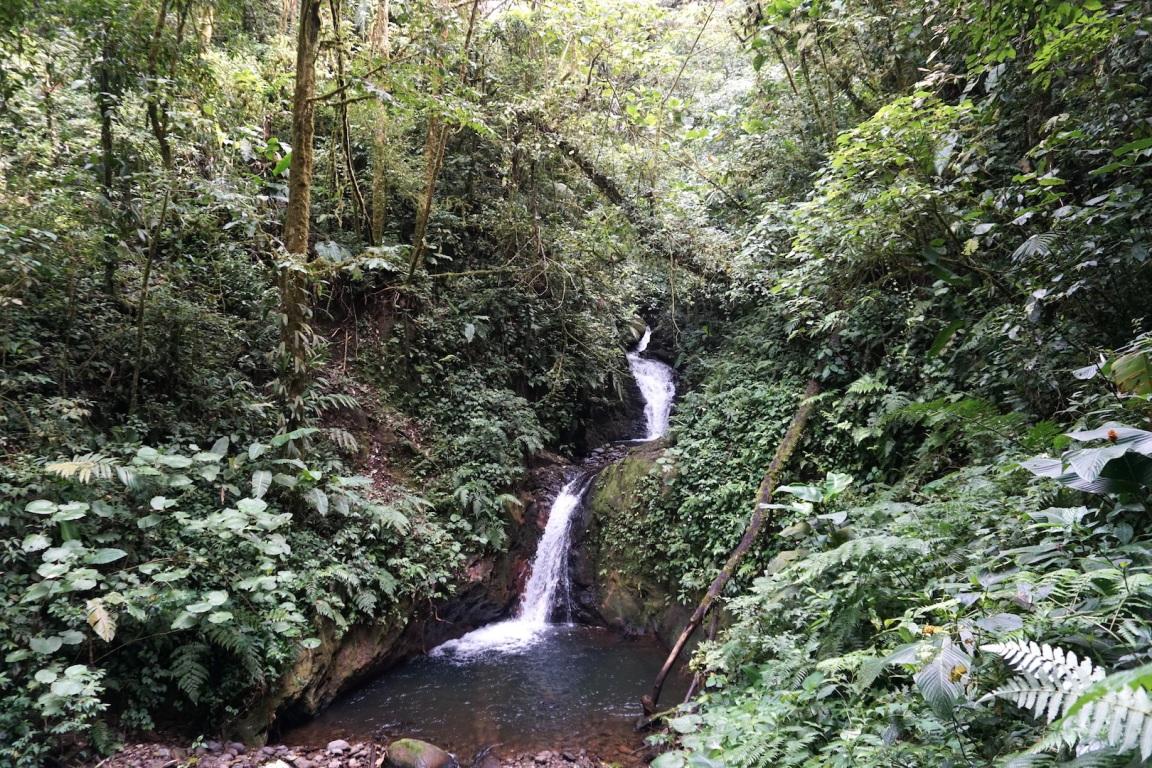 Monteverde16
