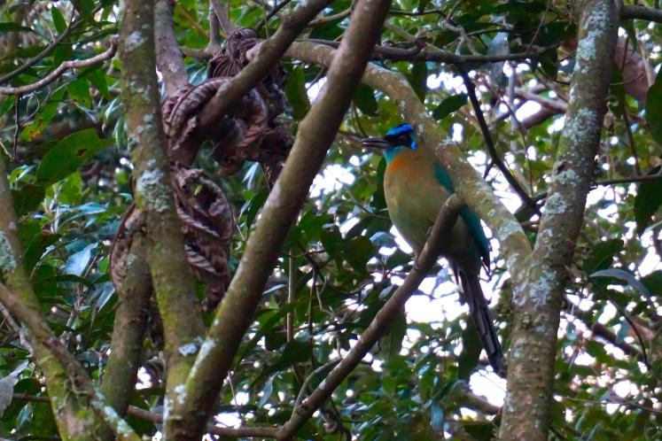Monteverde19