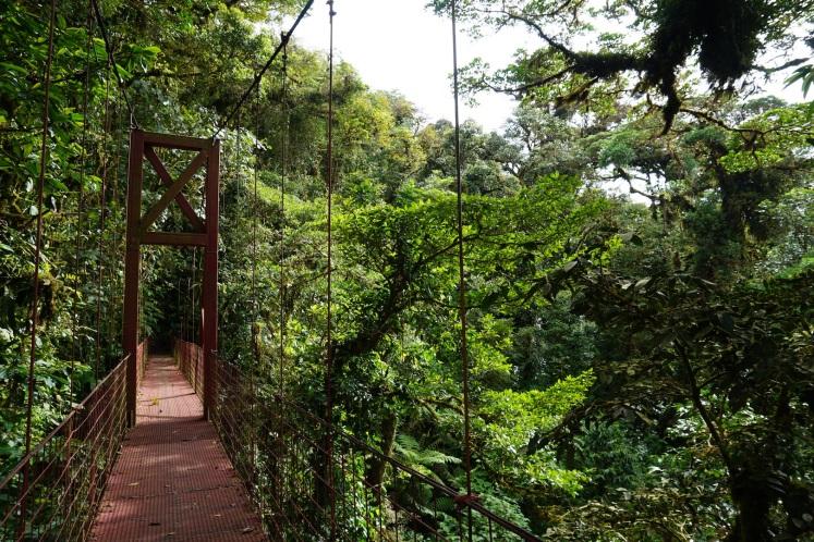 Monteverde8