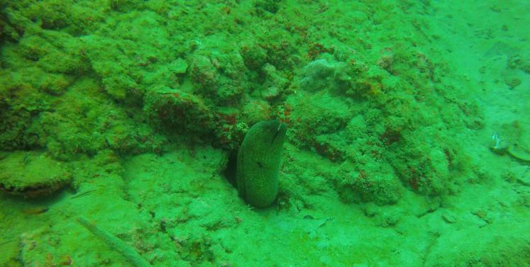 Plongée Isla Caño26