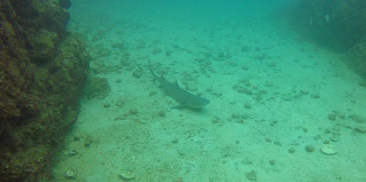 Plongée Isla Caño28