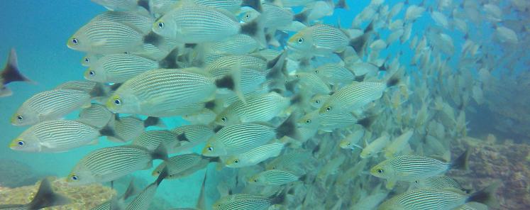 Plongée Isla Caño33