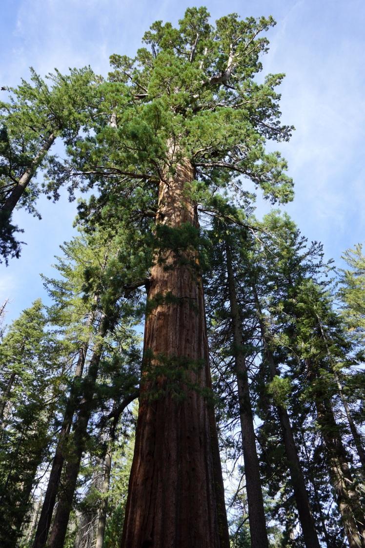 Yosemite39